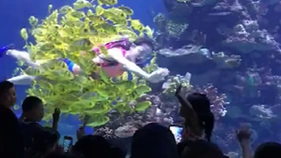 The beautiful underwater world, this performance is wonderful.