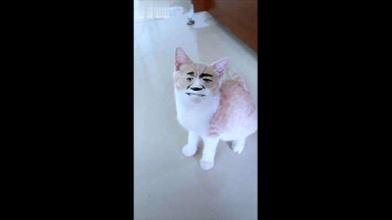 This cat may have encountered a fake owner!