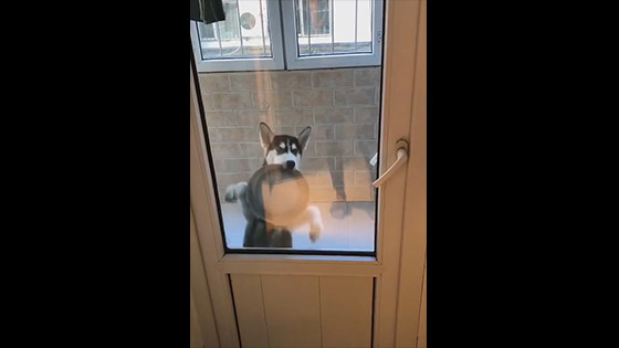 Dog: Let me go in, it's time to eat! ! ! Give me food soon!