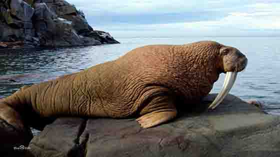 Have you ever seen a walrus who can play saxophone?