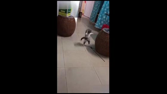 Hilarious Video 2 Will you watch the cat dancing with the rhythm?
