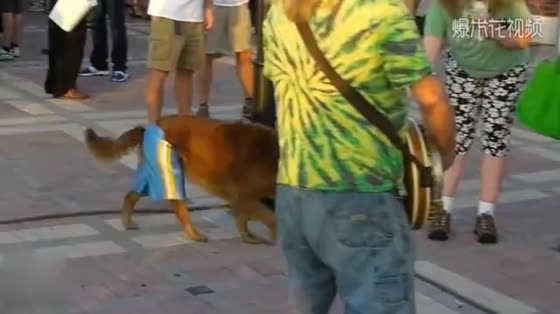 The street show brought a Labrador and made a fortune in the end.