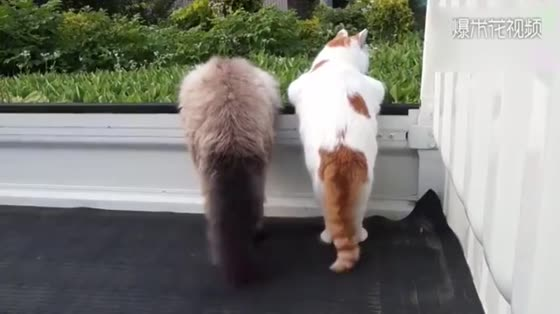 I can see this tail for a year, and I can really see it for a year.