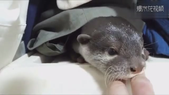 Otter, although you have deformed my face, still hold you tight