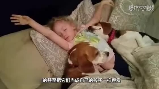 Painful dog mother howls for the puppy. Mother and son are touching. Fortunately, she meets a kind person.