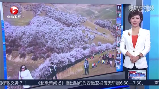 The beautiful Yili, Xinjiang, 30,000 mu of primitive wild apricot blossoms