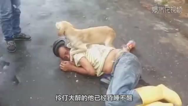 The dog protects the drunken owner and keeps the police away. When the owner wakes up, the dog becomes pet in a second.