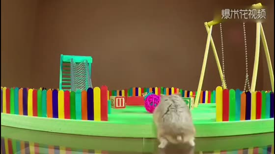 What is the concept of having a skillful master? Hamsters will understand after watching the video.