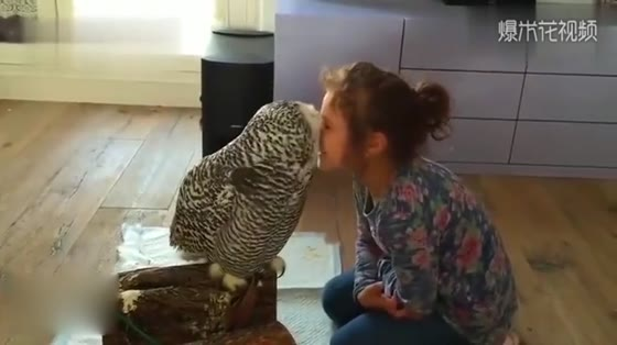 The girl pretended to kiss the owl's face and was a little worried about her nose.