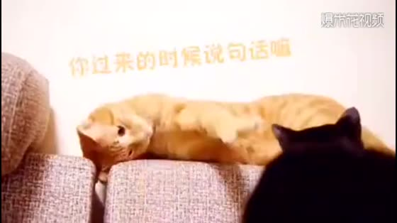Funny cat videos, friendship boats turn upside down