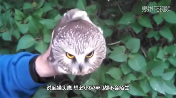 When the owl heard the master's call, it came running with a little excitement. It was so funny.