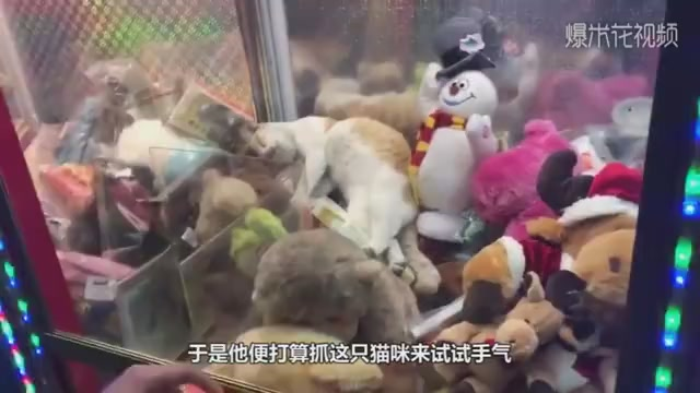 A cat sleeps in a doll machine, causing pedestrians to catch cats crazily. The camera takes funny moments.