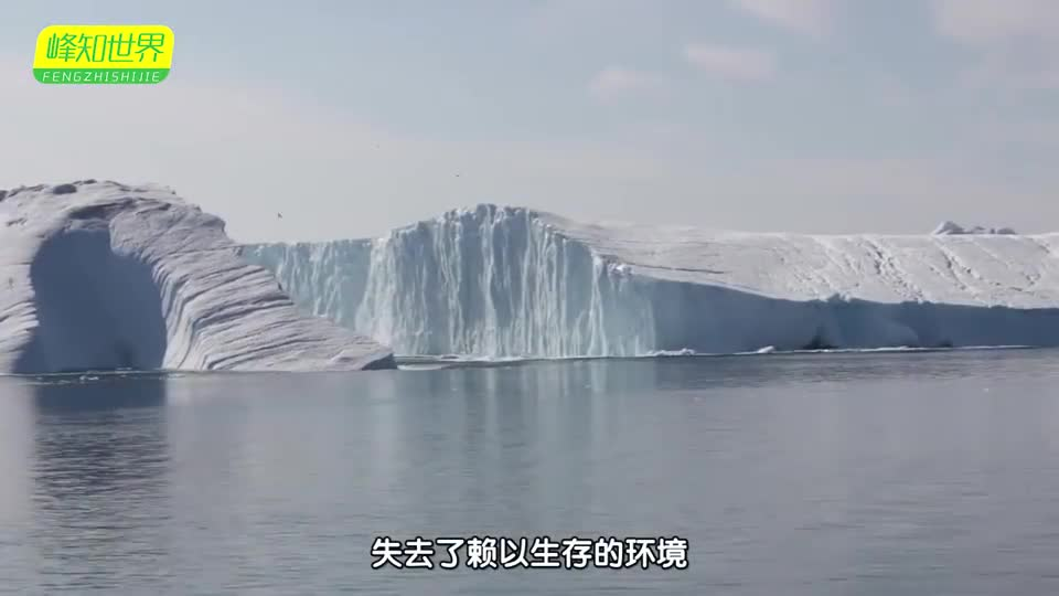 Antarctic giant icebergs have collapsed and polar bears are losing their homes to save them.