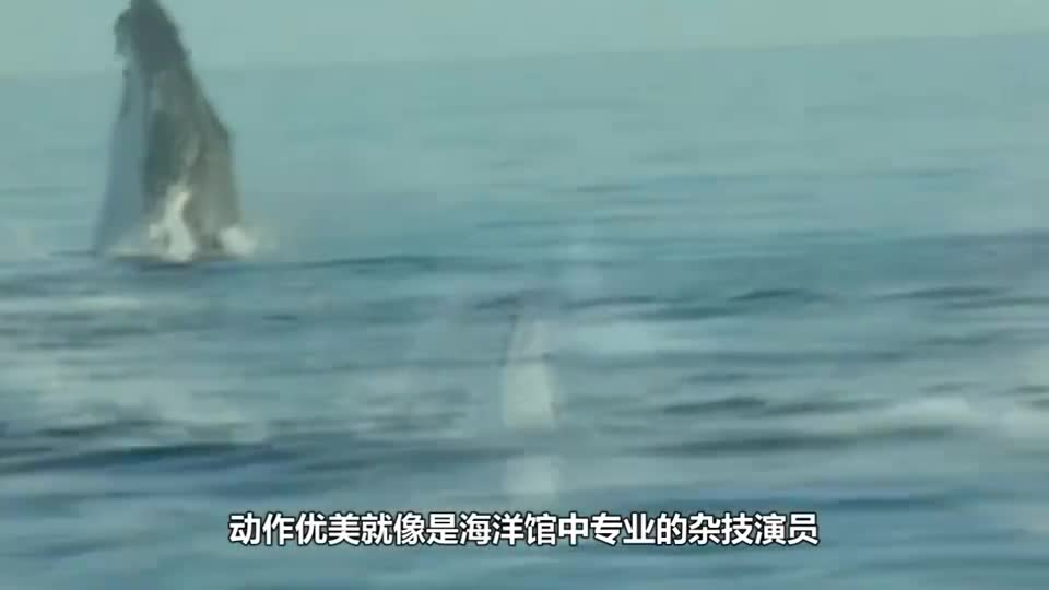 The 15-meter-long whale jumped up from the sea and hit the canoe. The whole process was photographed.