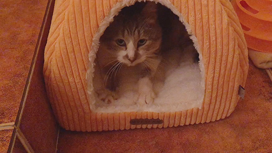 Little cute cat is very happy that owns a new cat's nest for the first time